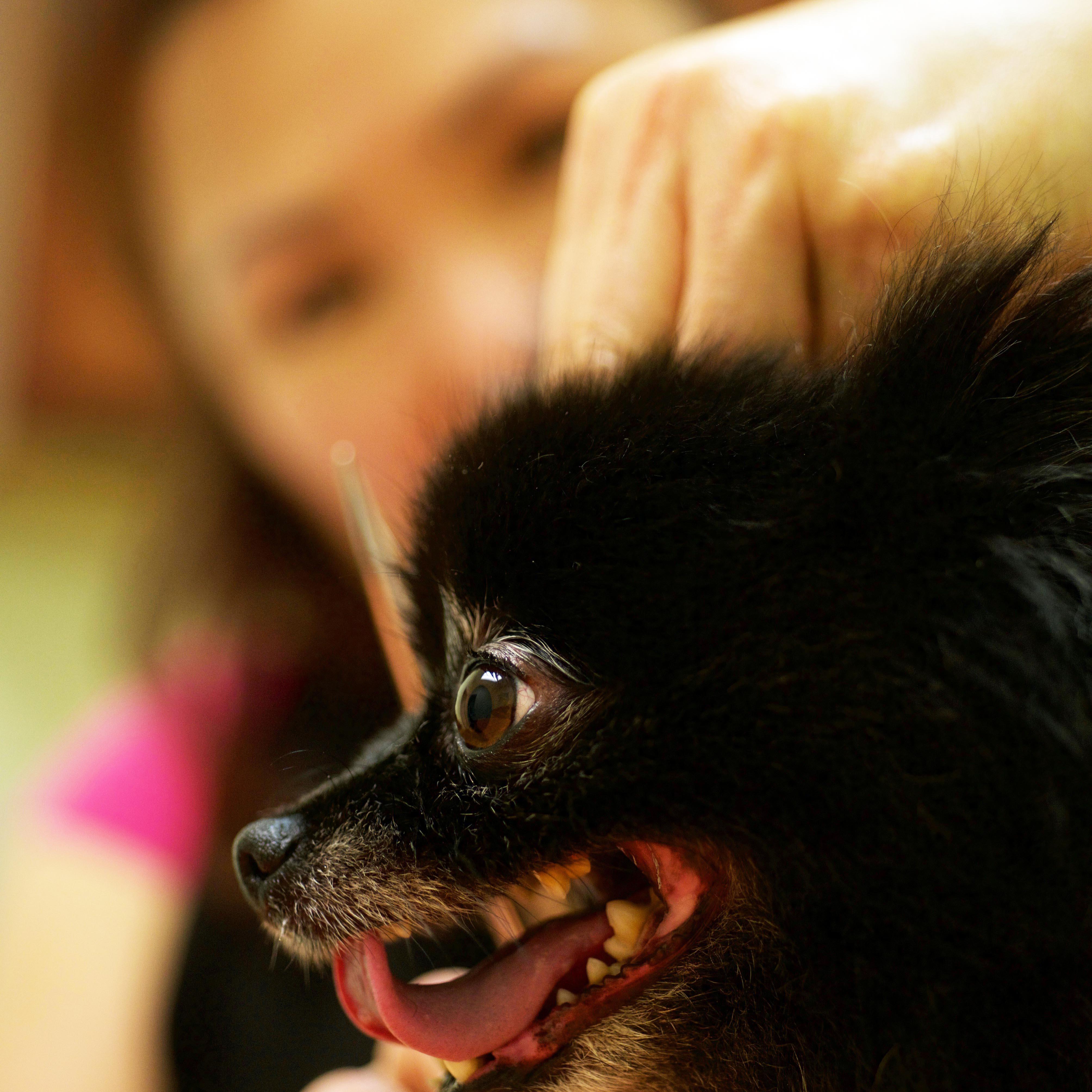 Petman dog groomingstaffordfredericksburgspotsylvaniafalmouth at petman grooming solutioingenieria Images