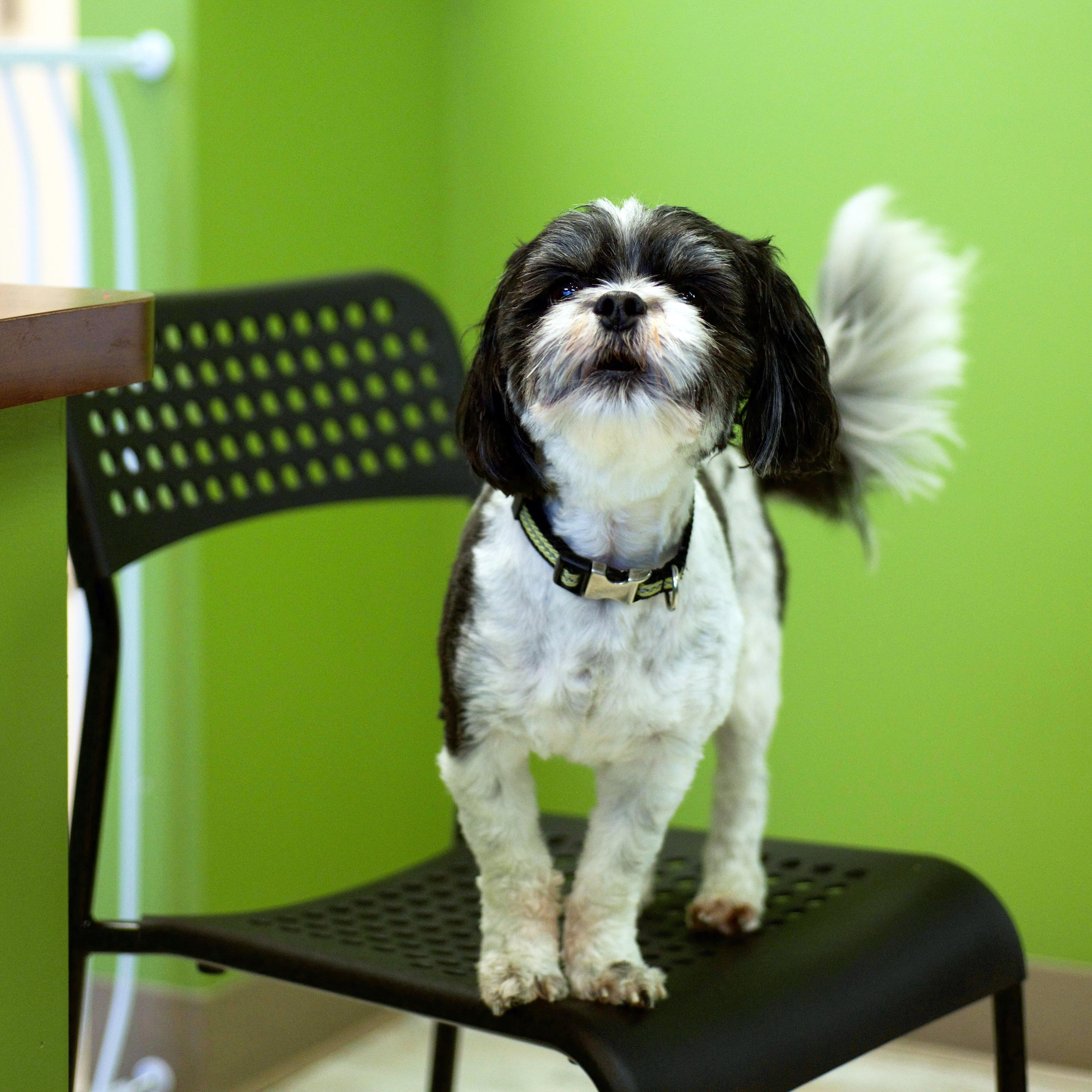 Petman dog groomingstaffordfredericksburgspotsylvaniafalmouth visits to petman grooming should be enjoyable for your beloved pet we take extra special care of your little ones providing them with comfortable resting solutioingenieria Images